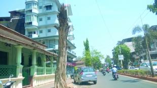 Tree-stumps pose danger to citizens in Vasco