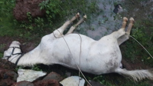 High velocity winds snap live wire, animals electrocuted