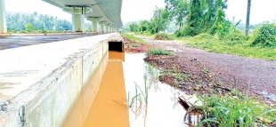 Goan farmers have flooded miseries in their fields of woes