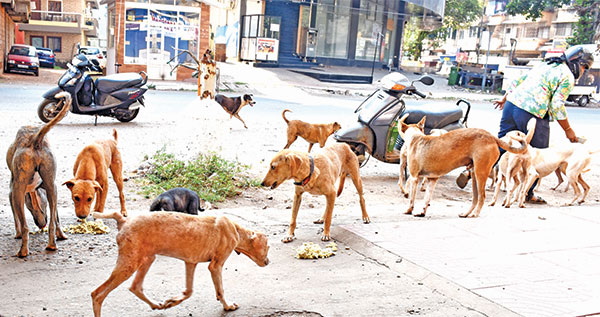 The Fate of Stray Animals  in Goa's COVID Times