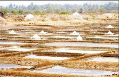Fate of wetlands: The absurd CRZ Amendment 2020
