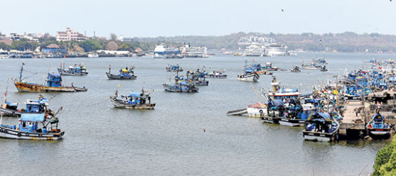 Govt to draft special SOP to monitor  fish-related activities across jetties