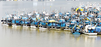 Labour shortage likely to keep trawlers anchored