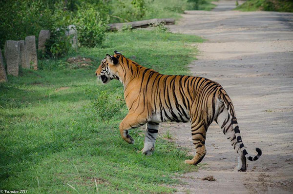 NBW defers decision on double tracking through tiger reserve