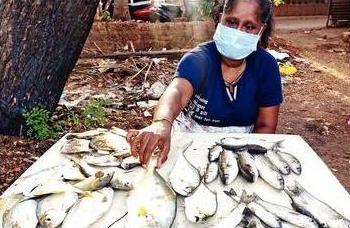 Goa's MSP for fish