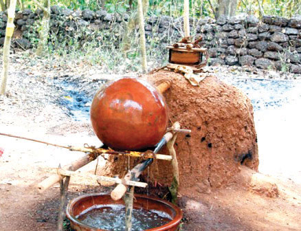 Distillers expect a fenitastic season this year