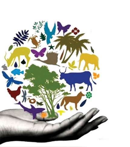 Protect biodiversity  to prevent the next pandemic
