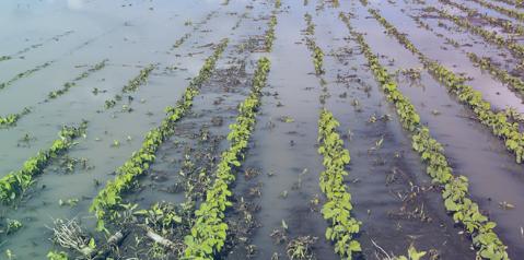 Continuous rains have damaged crops, complain Salcete farmers